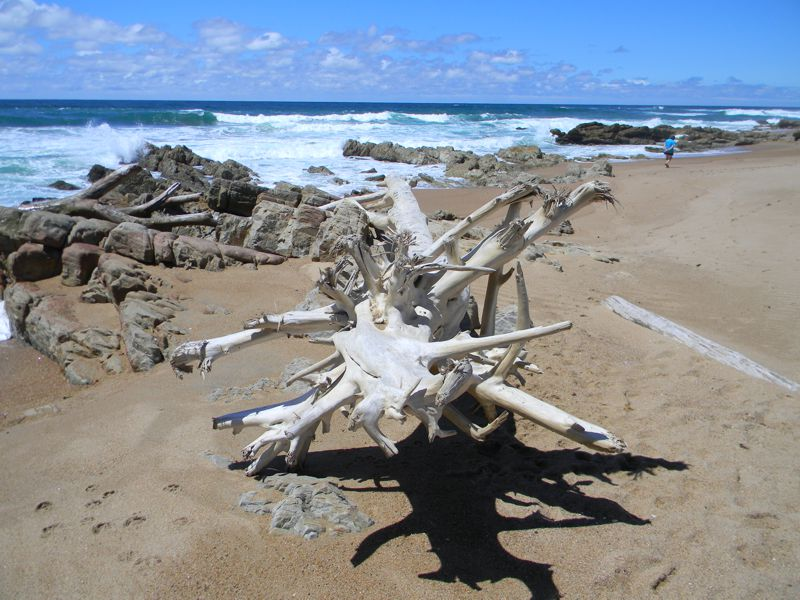 Driftwood on Sea Park Beach